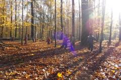 Herbst-15